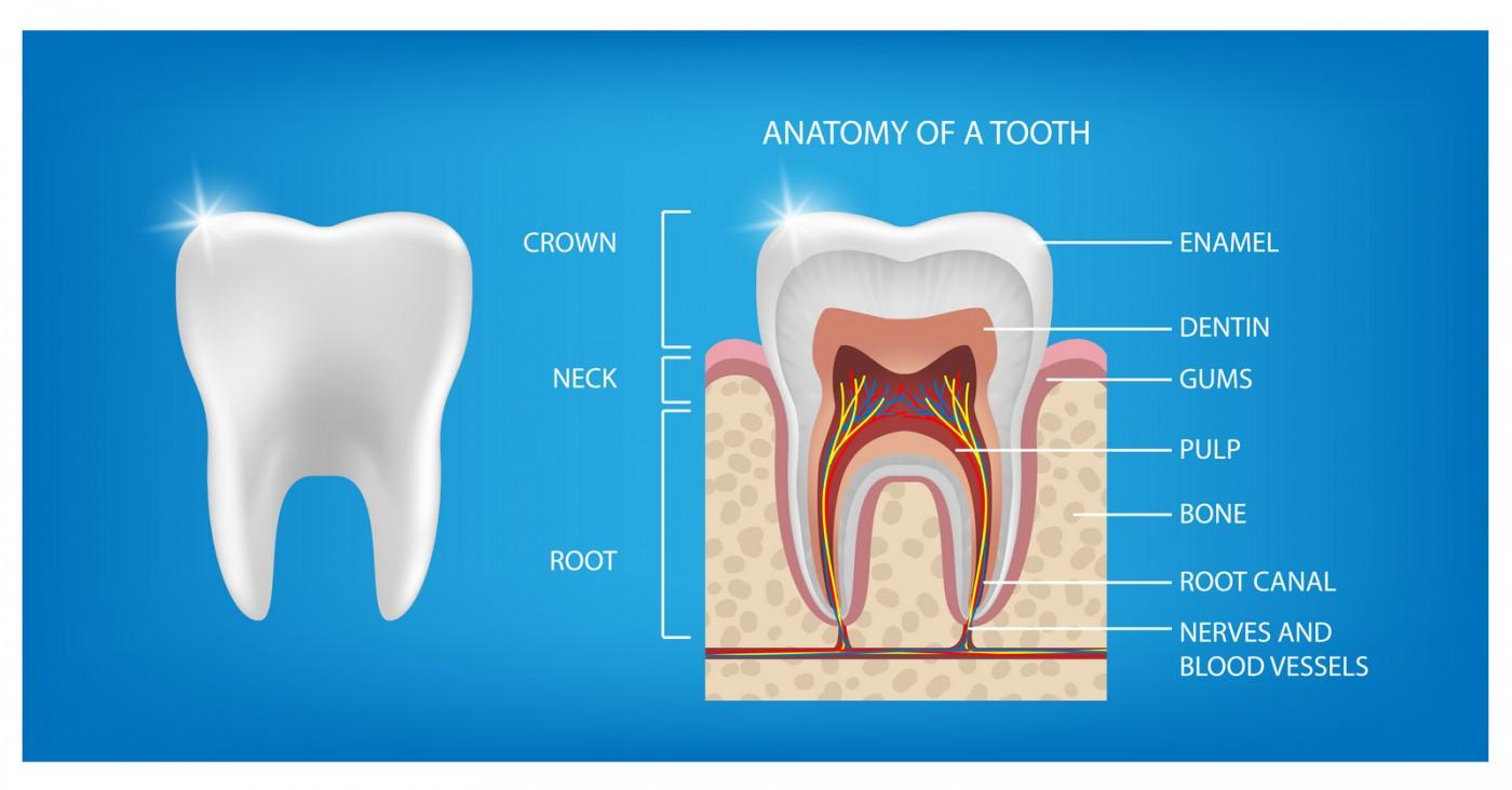 Structura dintelui